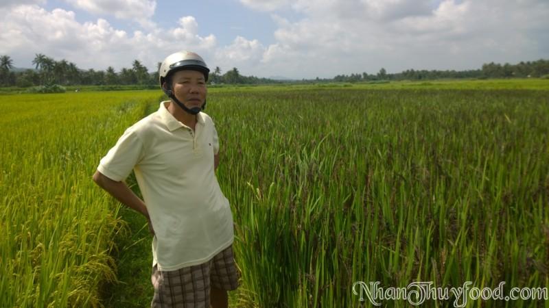 Bác nông dân bên ruộng lúa Nhân Thùy