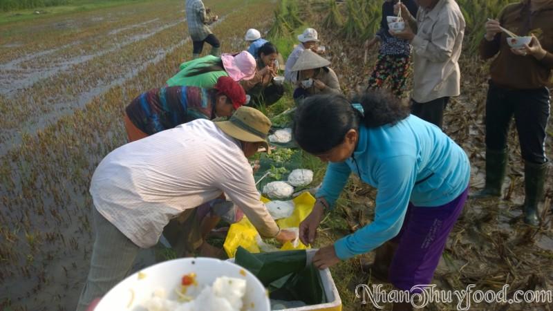 Cảnh thu hoạch lúa Nhân Thùy