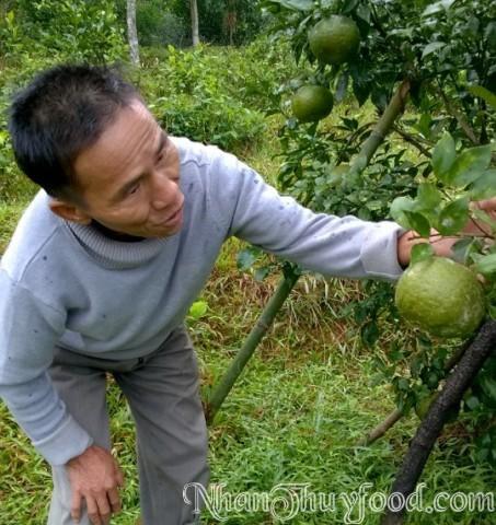 Bác Phong chăm sóc vườn cam của mình rất cẩn thận, chu đáo đến từng quả một. Nên cam của Bác có tiếng trong vùng.