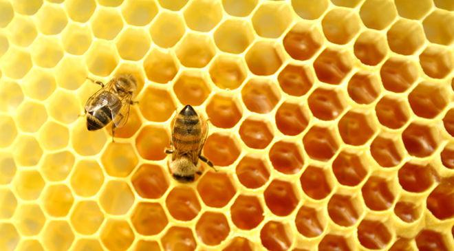 phan-hoa-mat-ong