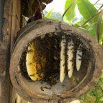 Đi tìm cách phân biệt mật ong rừng thật giả – cách nào là áp dụng được?