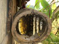 Tổ ong mật tự nhiên