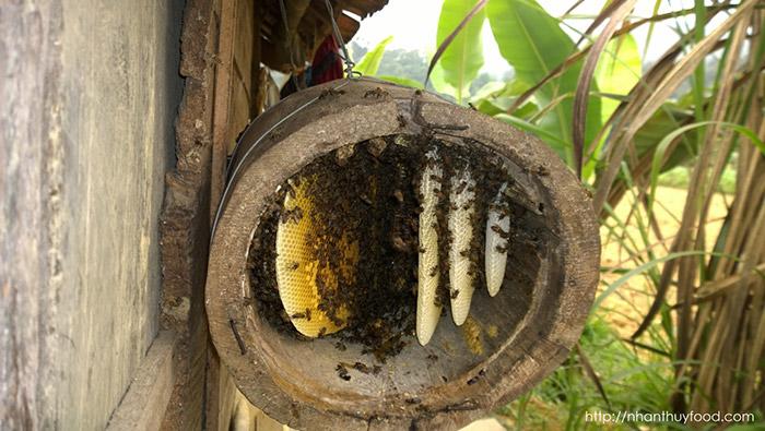 Tổi ong mật tự nhiên