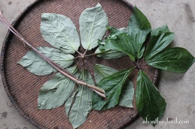 bộ lá của cây Thất Diệp Nhất Chi Hoa