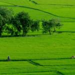 10 nguyên tắc đảm bảo cho sử dụng phân bón hợp lý
