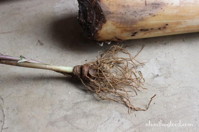 củ của cây có các ngấn rõ ràng và một năm có 1 ngấn