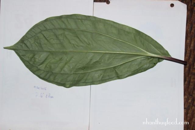 mặt dưới lá cây thất diệp nhất chi hoa