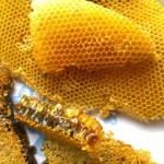 Thế nào là ong mật cổ xưa nuôi tự nhiên?