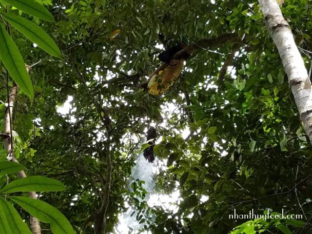 Người thợ rừng phải rất khéo léo mới có thể lấy được tổ ong mà không bị ngã.