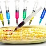 GMO là gì? và tác động của nó đến hành tinh này ra sao?