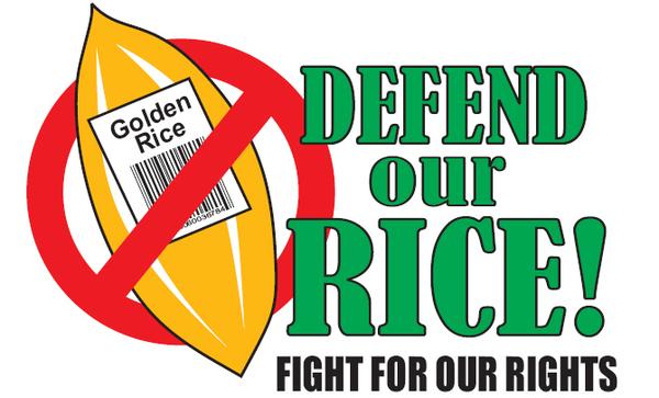 Gạo Vàng - GMO đang gây hại cho người tiêu dùng