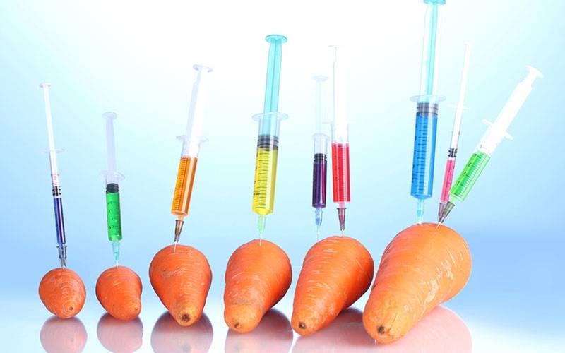 Cà Rốt cũng không thoát khỏi GMO