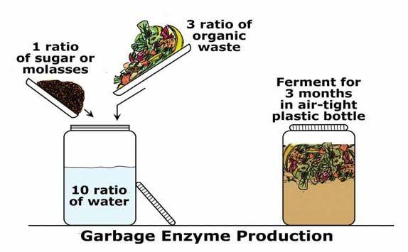 Công thức tạo enzyme rửa chén sinh học