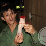 Thượng dược quý hiếm từ vùng núi Hương Sơn, Hà Tĩnh