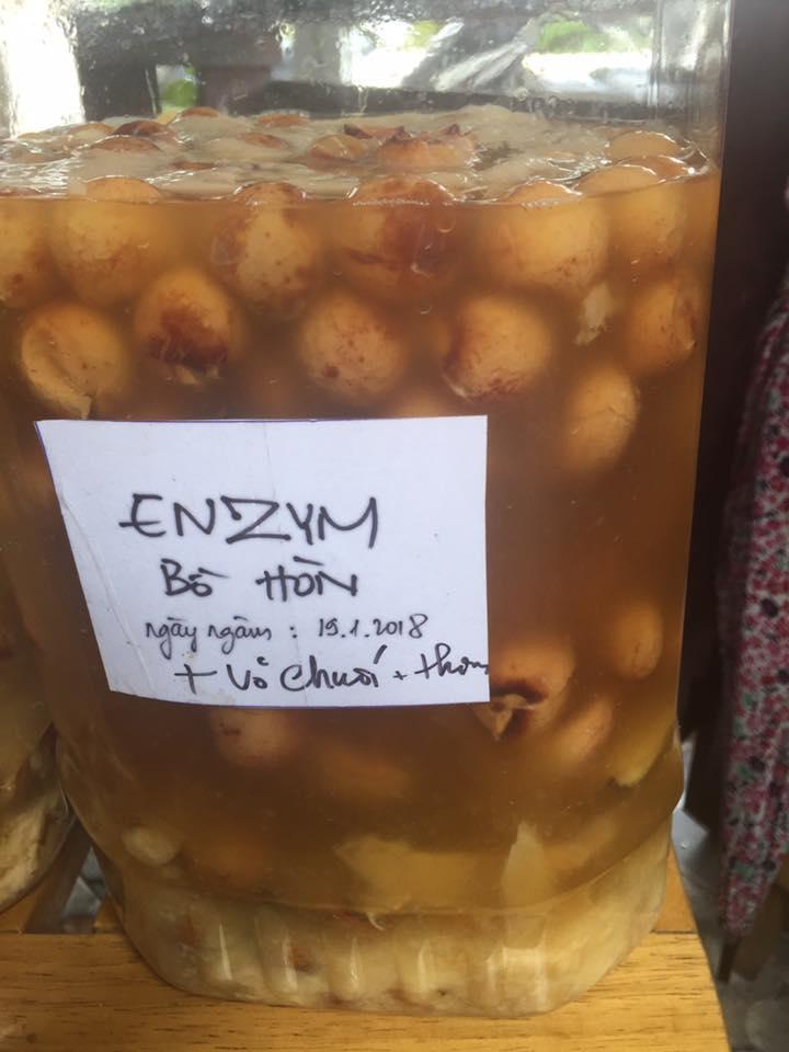 cách làm enzyme bồ hòn