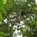 Cách chúng tôi khai thác mật ong rừng tự nhiên.