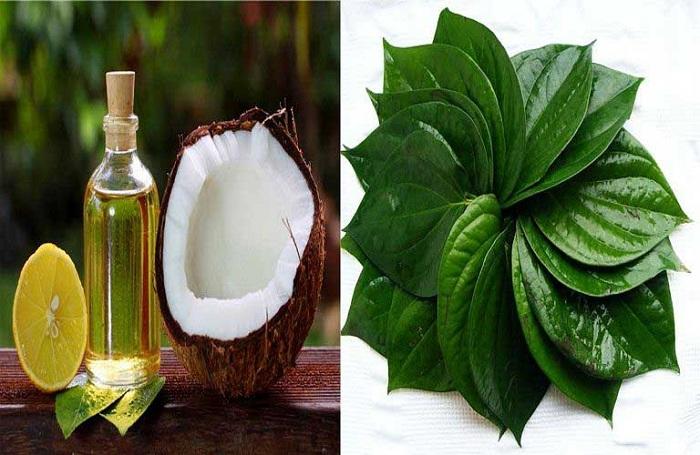 Chữa chàm bằng dầu dừa và lá trầu không