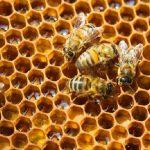 Mật Ong Là Gì? Có Mấy Loại Mật Ong?