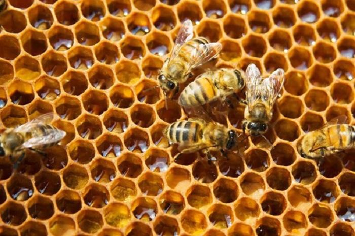 Ong thợ đang nhả mật vào tổ